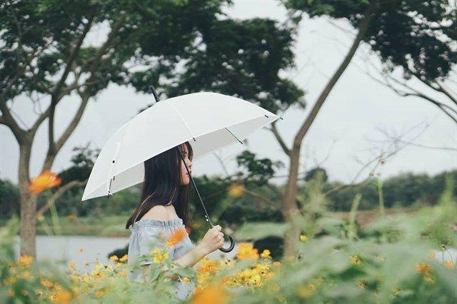 Sống ảo cùng cánh đồng hoa tuyệt đẹp tại Đà Lạt Milk 1