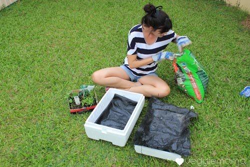 Kỹ thuật trồng rau sạch trên sân thượng đúng quy trình 4